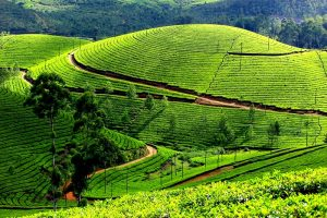 kerala-is-a-state-in-the-southwest-region-of-india