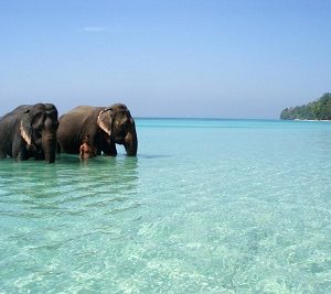 havelock-island-at-andaman-and-nicobar