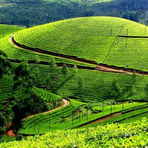 kerala-is-a-state-in-the-southwest-region-of-india-300x300